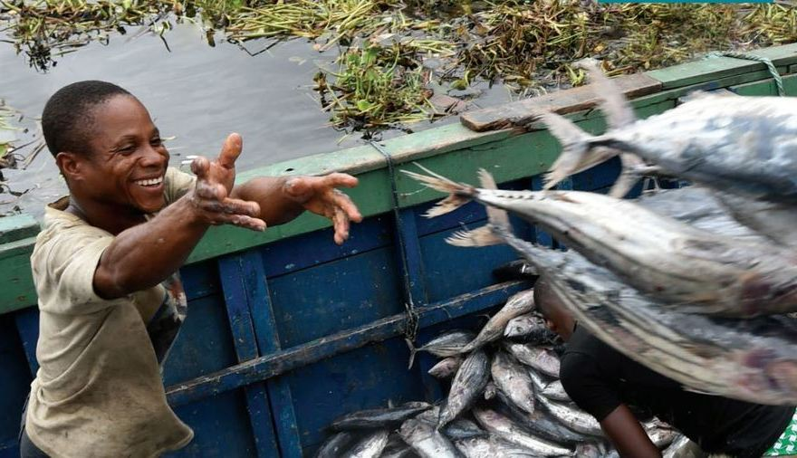 Nyeri County stocks dams with fingerlings to boost fish production