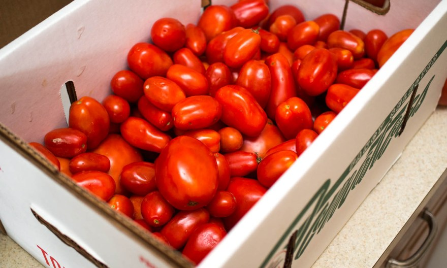 Tomatoes harvesting and storage tips