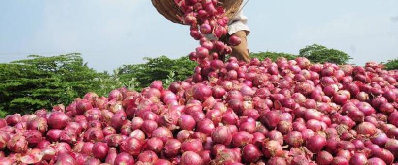 ONION FARMING mkulimatoday.com