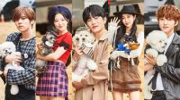 Download Idol Star Dog-agility Championships Korean Show