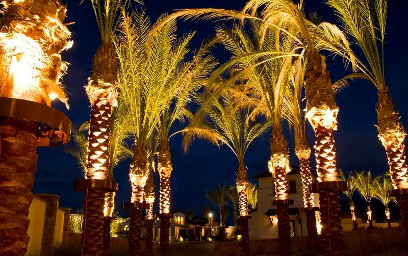 best palm tree christmas lights how to