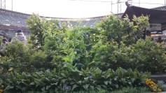 ATTPark_CF Garden
