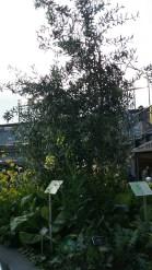 ATTPark_Garden 5