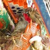 sparrow-4