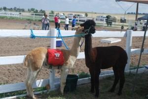 Elbert County Fair
