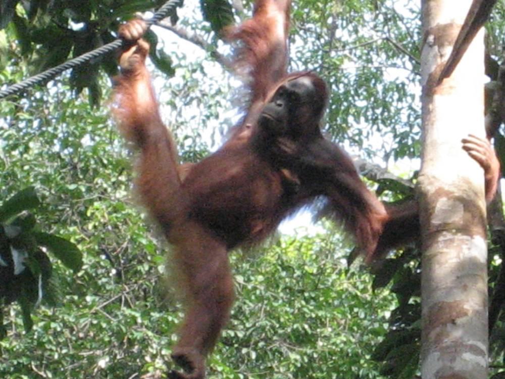 Borneo Malaysia (3/3)