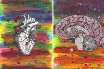 心臟移植等待漫長!!能增加可移植的心臟嗎?