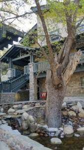 Grand Idyllwild Lodge