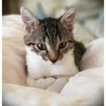 Jak nie zwariować z kotem? Kompletujemy wyprawkę