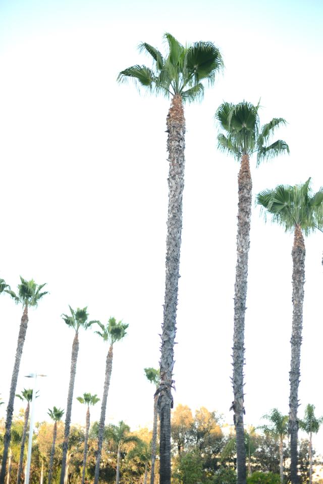 los angeles palm trees, M Loves M