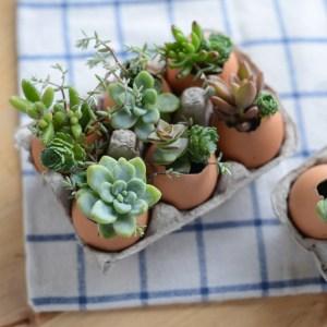 How to DIY a eggshell terrariums!   M Loves M @marmar