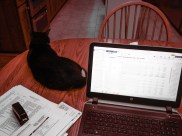 Doing the books with the help of Sox.