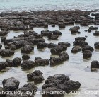 Detail from Stromatolites in Shark Bay - Paul Harrison, 2005