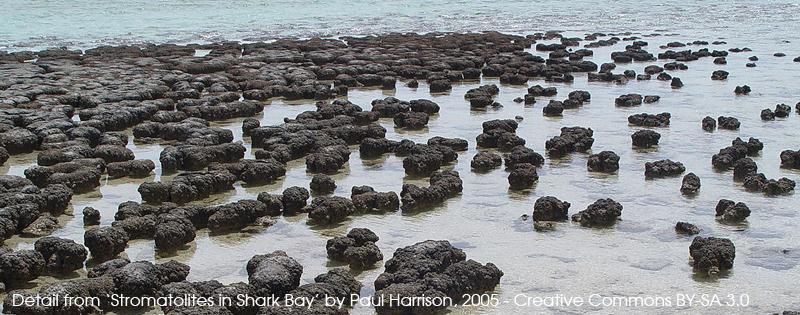 Detail from Stromatolites in Shark Bay - Paul Harrison, 2005