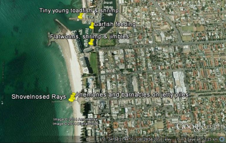 Glenelg night walk sighting locations, Nov 29th 2014