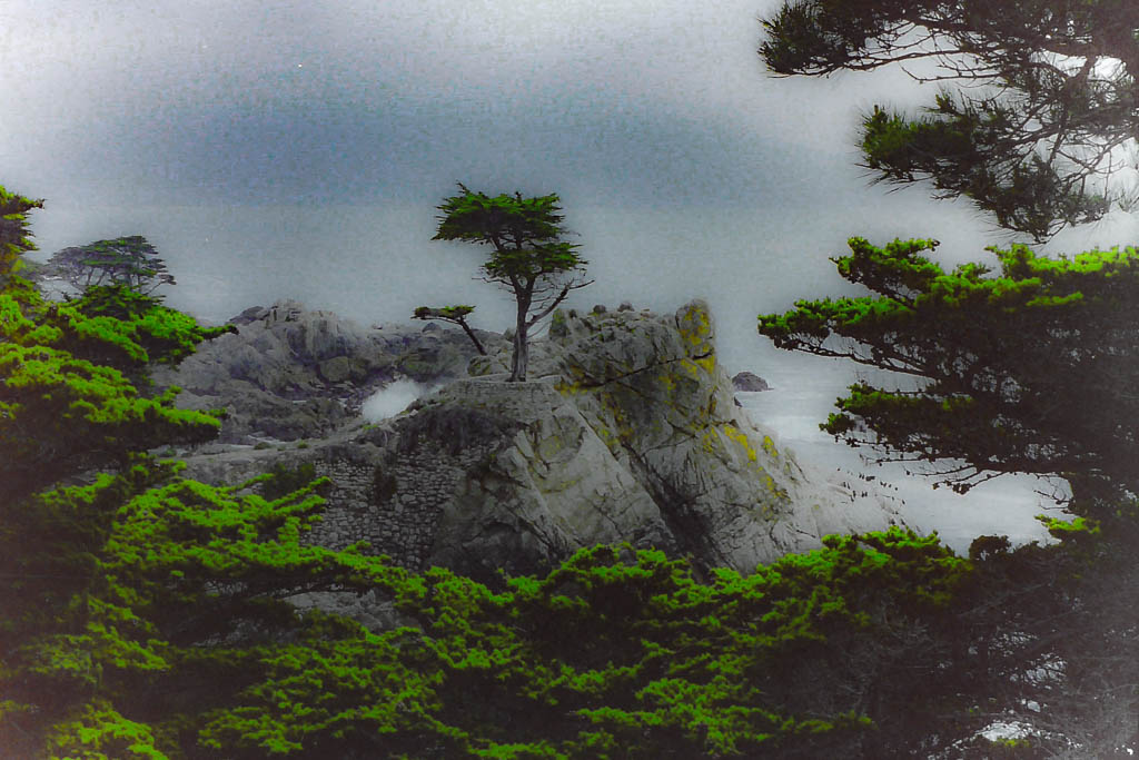 Solitary Pine Tree – Big Sur