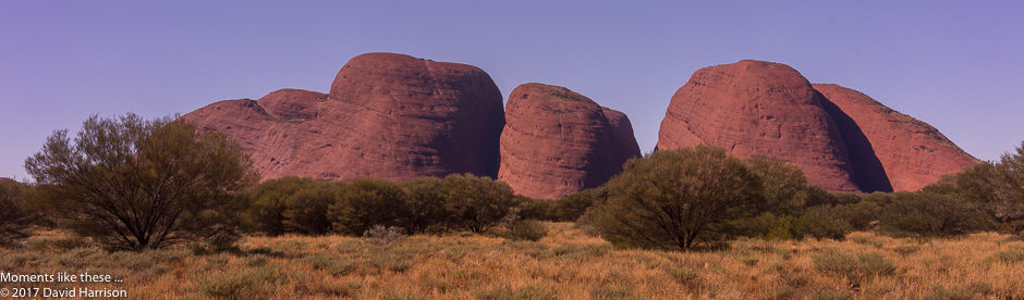 Kata Tjuta (The Olgas) – plants, trees and the Valley of the Winds