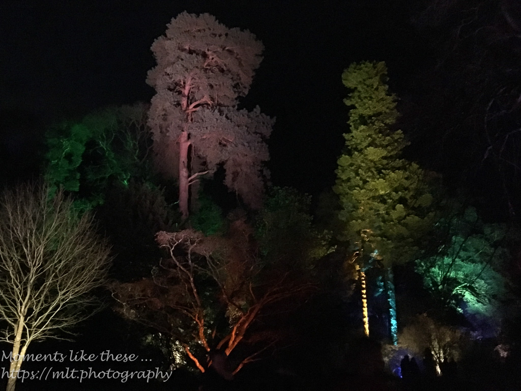 Westonbirt lights up – 1