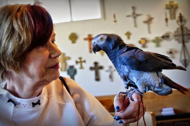 Sharon holds Gracie, a 20-year-old African Grey Parrot.  Gracie has a 200-word vocabulary, but was a little tongue-tied this morning due to all the excitement.