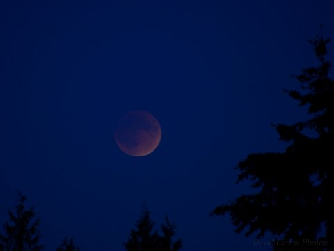 Supermoon Lunar Eclipse. Mountlake Terrace. See you again in 2033. 9-27-15