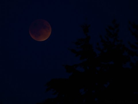 Supermoon Lunar Eclipse. See you again in 2033. Mountlake Terrace, 9-27-15