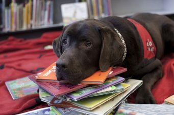 Canines from Reading with Rover and Pet Partners will be at the Mountlake Terrace Library on Saturday, Oct. 15, for young readers to read aloud to.
