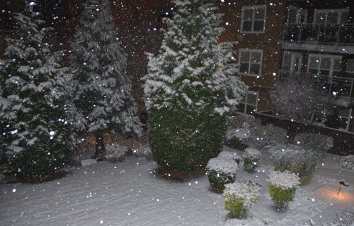 More snow as it falls in Edmonds around 1 a.m.