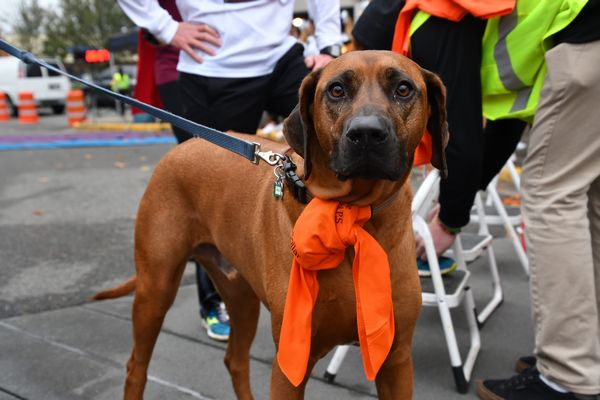 First dog across the line was Beau, from the Sherwood Elementary team.