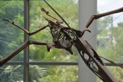 Pterosaur at CofC