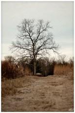 untitled shoot-6476 copy 2