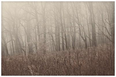 untitled shoot-6851 copy 2