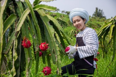 "A dragon fruit farm in Guizhou Province supported by Pizza Hut's ""Grow Local Initiative"" Program"