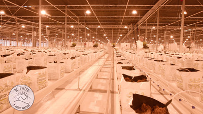 Canopy Growth's 1.3 million sq. ft. greenhouse in Aldergrove, BC. (CNW Group/Canopy Growth Corporation)