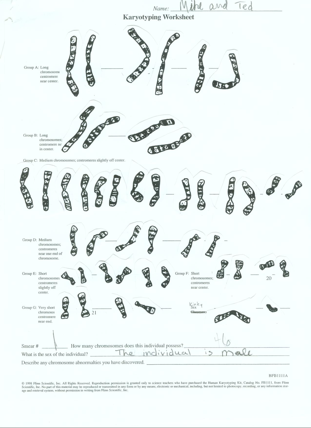 worksheet. Karyotyping Worksheet. Grass Fedjp Worksheet