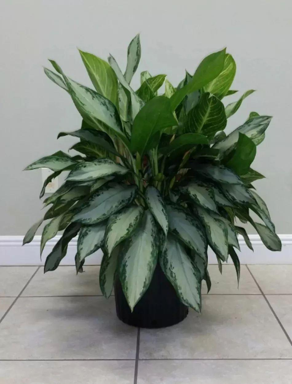 5種適合栽種在低光照環境下的室內植物 | 尋夢新聞