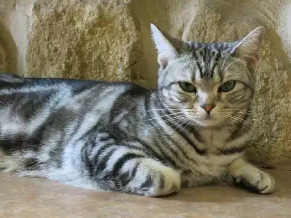 如何分辨公貓母貓。一是看坐姿。二是看… | 尋夢新聞