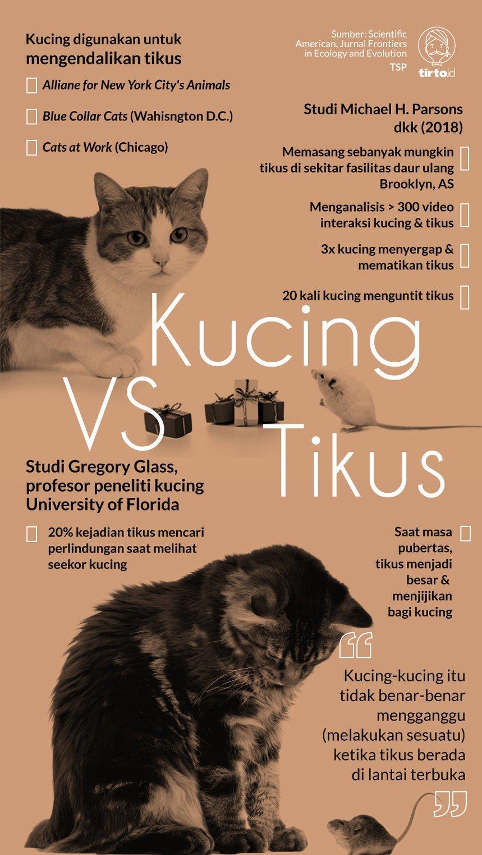 Nama Kucing Yg Bagus : kucing, bagus, Kucing, Ternyata, Efektif, Musuh, Tikus, Tirto.ID