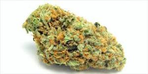 Sativa marijuana.