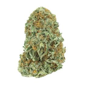 Grape God - Sativa dominant hybrid
