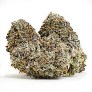 Purple White Lightning - Indica dominant strain