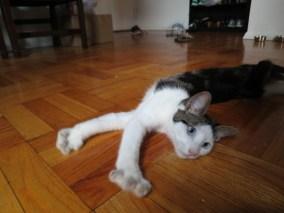 a new york cat! @ Murray Hill