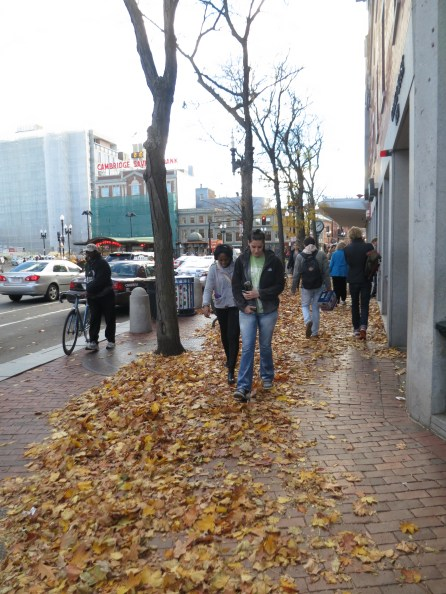 """""""you know these leaves musta been blown over here recently -- cause otherwise, it wouldn't be right in foot traffic's path, right?"""" astute observations of mark and madison"""