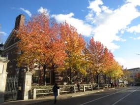 autumn leaves in Hahvahd <3