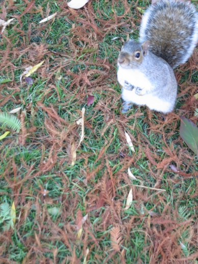 the REAL STARS of this trip!!! intrepid squirrels of Boston Public Garden. WAO.