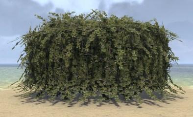 Hedge, Overgrown