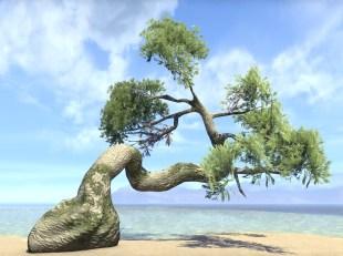 Tree, Summerset Srpuce
