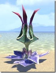 Plant, Large Lantern Flower 1