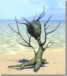 Plant, Marsh Nigella 1