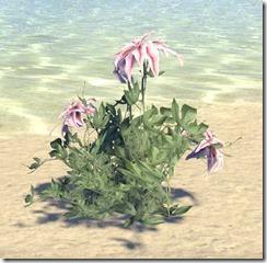 Plant, Star Bloom 1