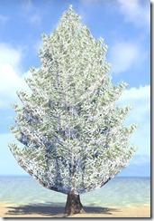 Tree, Tall Snowy Fir 1